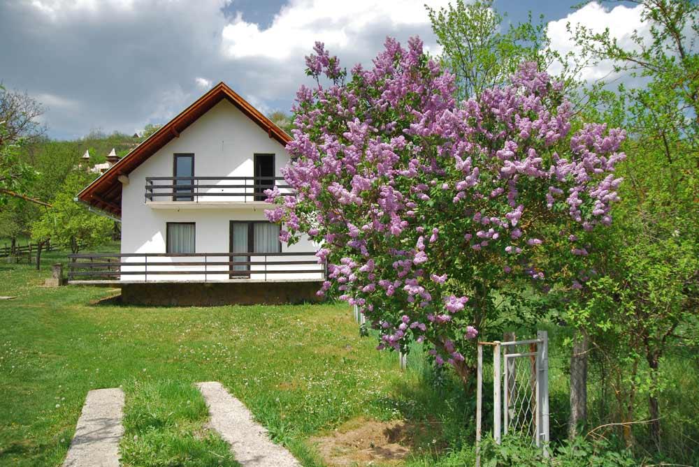 покупка недвижимости в сербии
